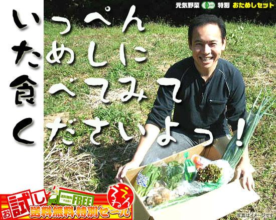 土のめぐみ 元気野菜 特別おためしセット